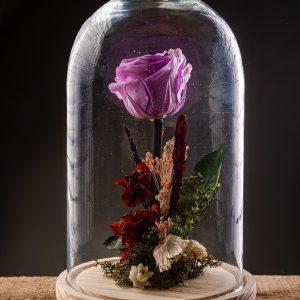 mise-floristeria-cupula-eterna-rosa-02